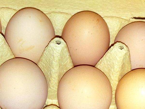Eier günstiger