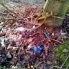 Der Müll zum Teil schon ein- und überwachsen