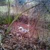 Bis in die hinterste Ecke liegt der Müll, in dem Bereich durch reichlich Blattfall schon großflächig überwachsen