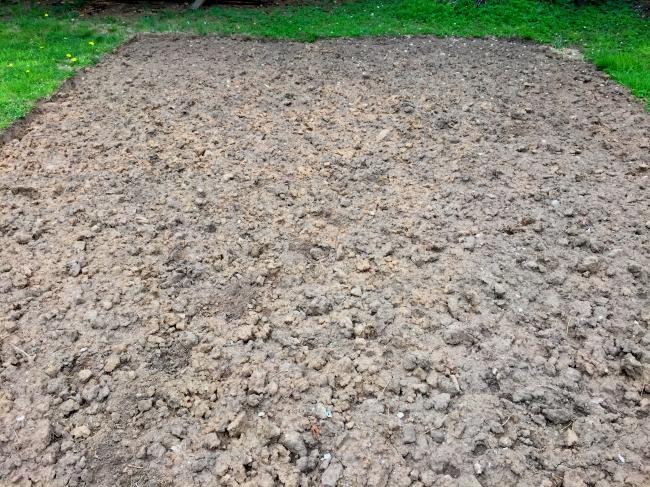 Das Beet, eine Woche nach der Einarbeitung des angetrockneten Rasenschnittes