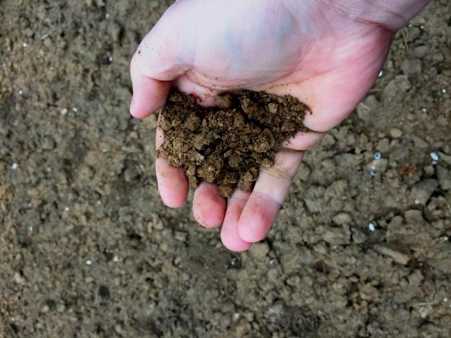 Das Ergebnis ist wunderbar feuchter und feinkrümeliger Gartenboden, ein himmelweiter Unterschied zu vorher