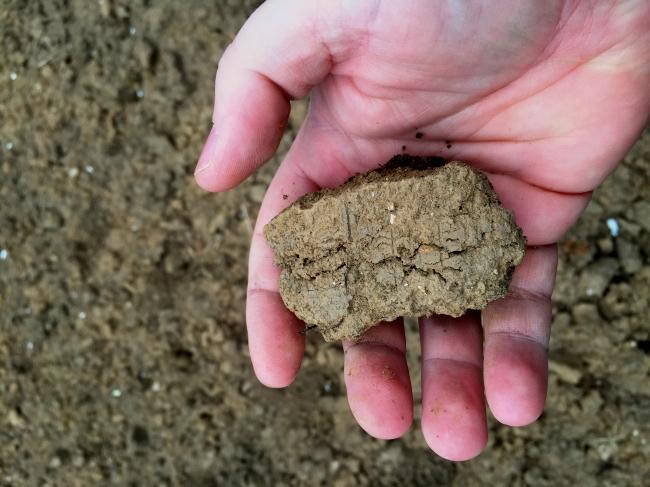 Einer der größeren Erdklumpen im Beet. Diese führten auf dem Testbeet im letzten Jahr dazu, dass ein Anbau kaum möglich war, weil der Boden zu grobkörnig war.